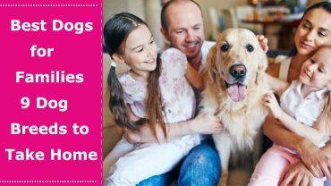 best dog for family