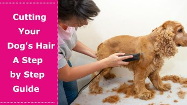 how to dog haircut