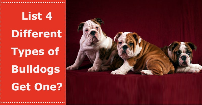 different types of bulldogs