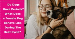do dogs have periods