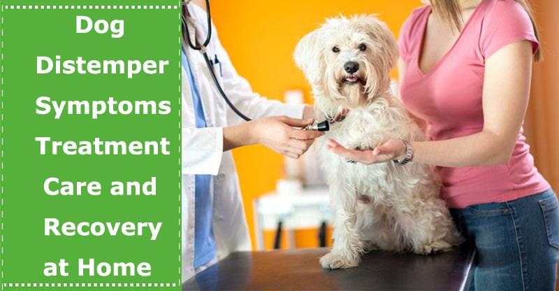 dog distemper symptoms treatment