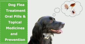 dog flea treatment and prevention