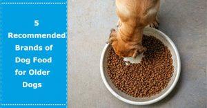 dog food for older dogs
