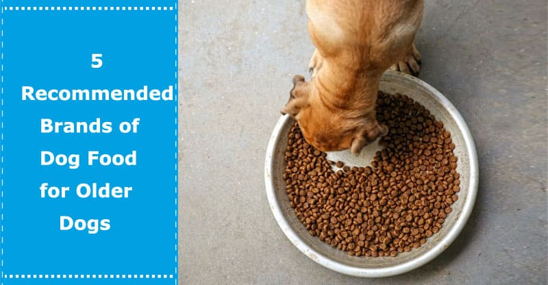 dog food for older dogs