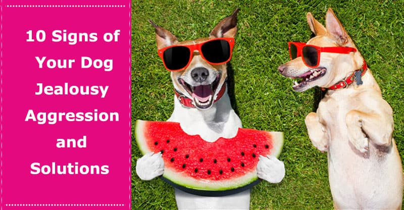 dog jealousy aggression signs