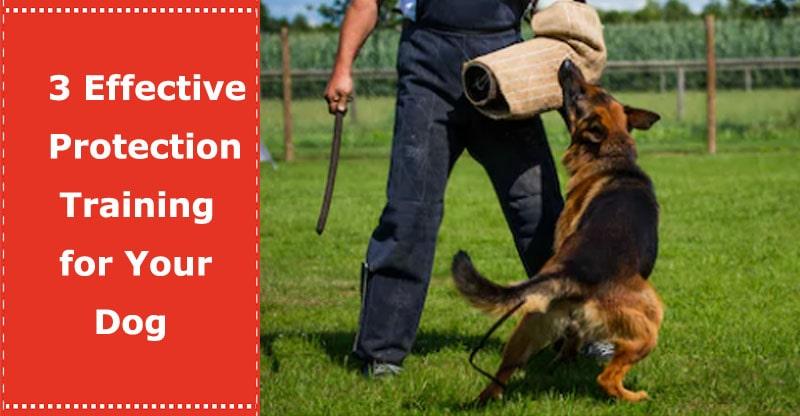 dog protection training