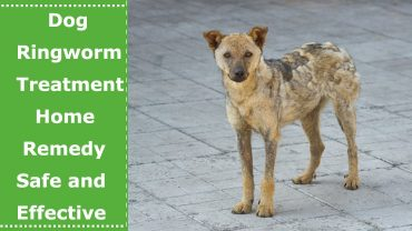 dog ringworm treatment home remedy