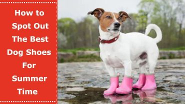 dog shoes for summer