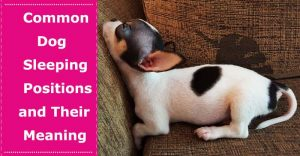 dog sleeping positions meaning