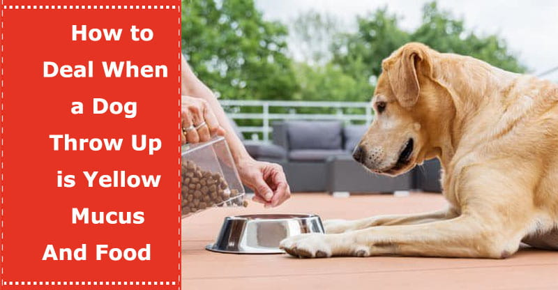 dog throw up is yellow mucus and food