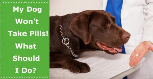 dog won't take pill