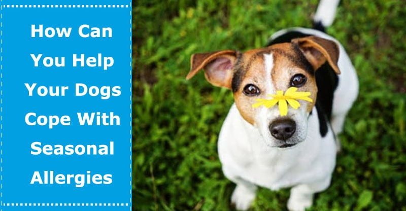 dogs with seasonal allergies