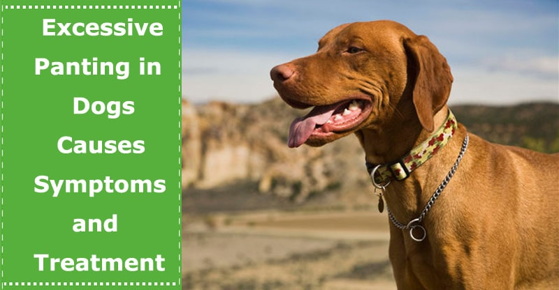 excessive panting in dogs causes symptoms