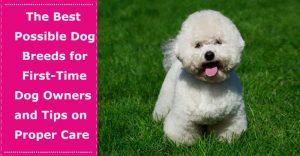 first time dog owner breeds tips
