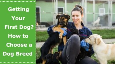 Getting Your First Dog How to Choose a Dog Breed