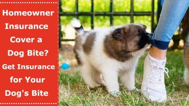 homeowners insurance dog bites