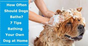 how often should dog bathe dog bathing at home