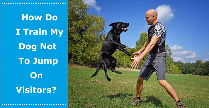 how to train a dog not to jump on visitors