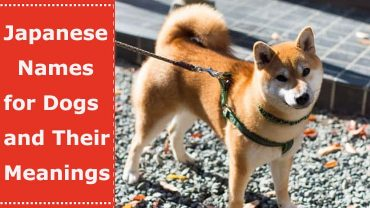 japanese names for dogs