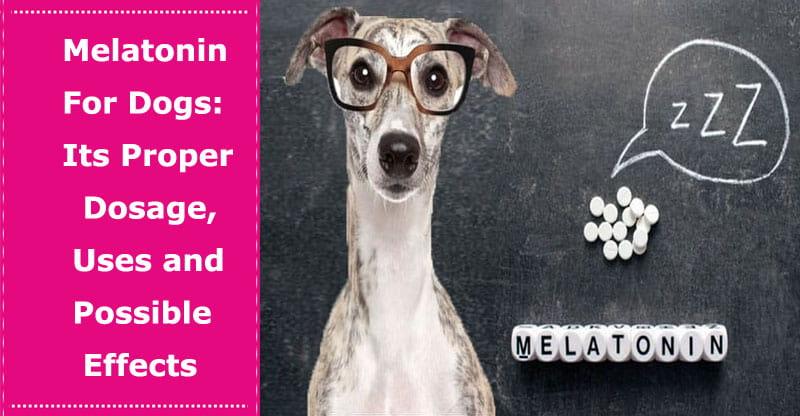 melatonin dosage for dog