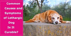 symptoms of lethargic dog