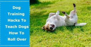 teach dog roll over