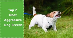 most aggressive dogs breeds
