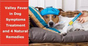 valley fever dog symptoms treatment