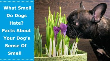 what smell do dogs hate