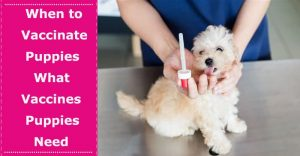 what vaccines do puppies need when to vaccinate puppies