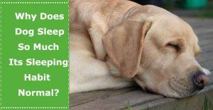 why does dog sleep so much
