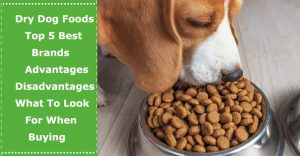 best dry dog food brands