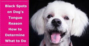 black spots on dog tongue