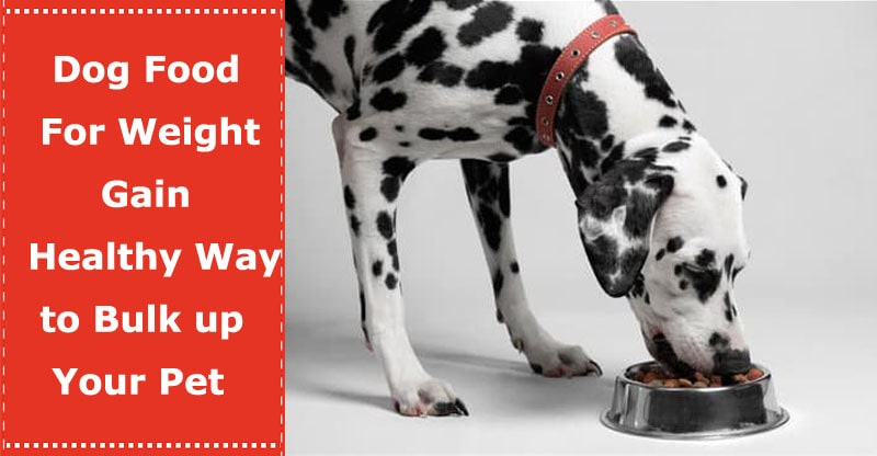 dog food for weight gain