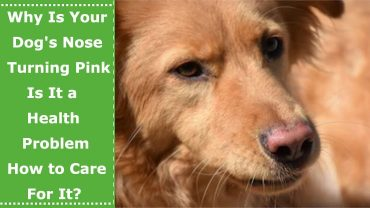 dog with pink nose