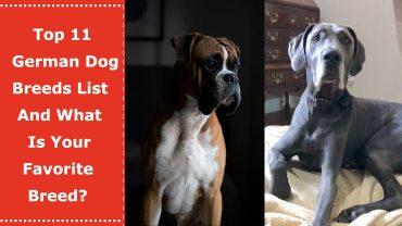 german dog breed