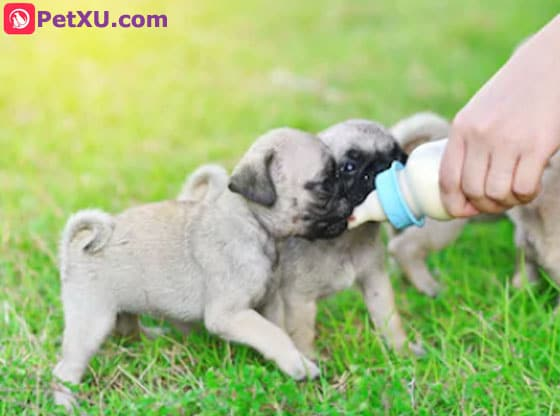 Goats Milk for Dogs: 8 Benefits, How to Feed & Homemade
