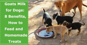 goats milk for dogs