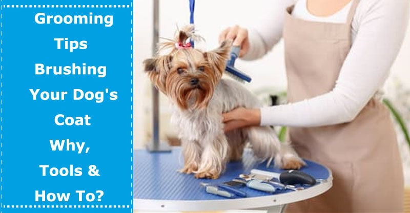 how to brush dog coat dog grooming tools
