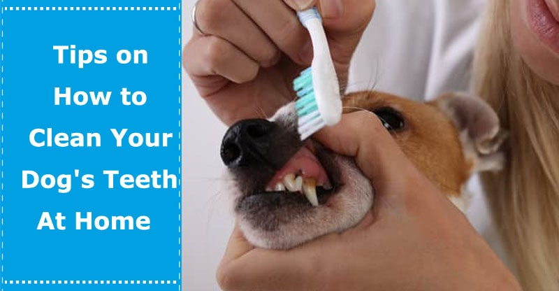 how to clean dogs teeth