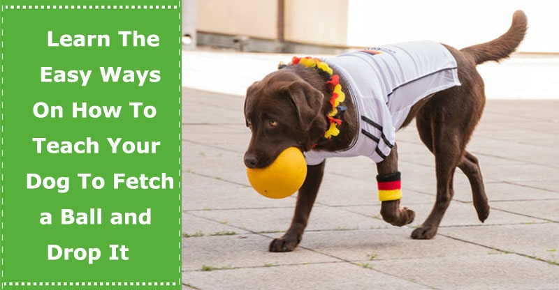 how to teach a dog to fetch