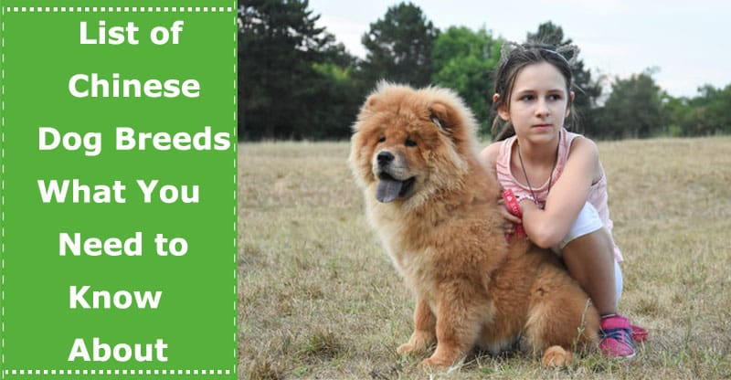 list of chinese dog breeds