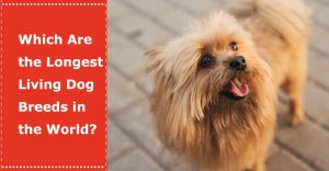 longest living dog breeds