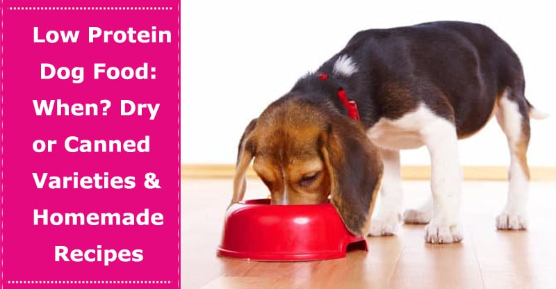 low protein dog food
