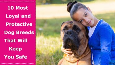 most loyal and protective dog breeds