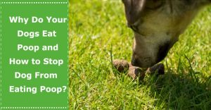 stop dog from eating poop