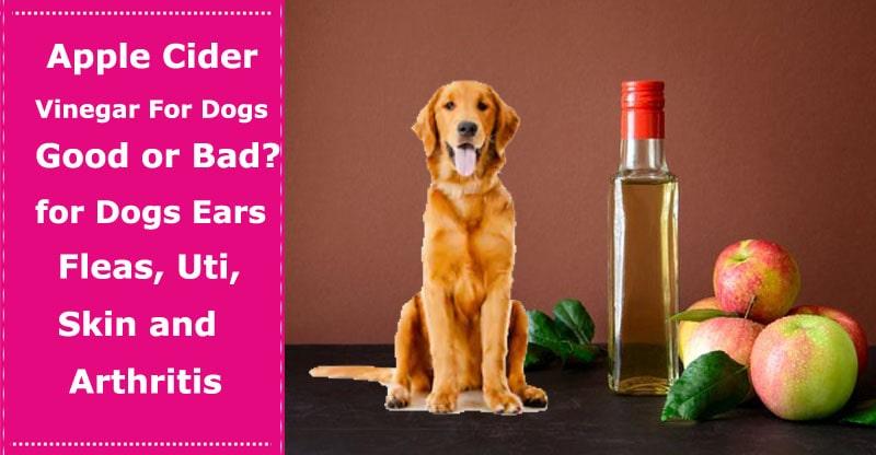 apple cider vinegar for dog