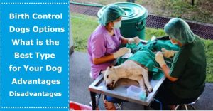 birth control for dogs