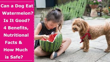 can a dog eat watermelon