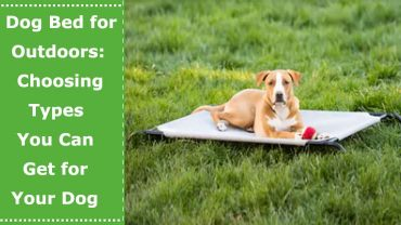 dog bed for outdoors